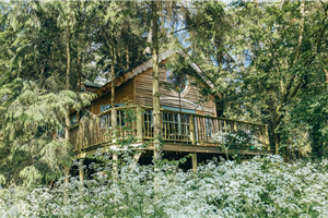 Treehouses at West Lexham