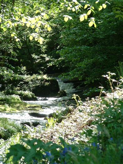 The stream in spring
