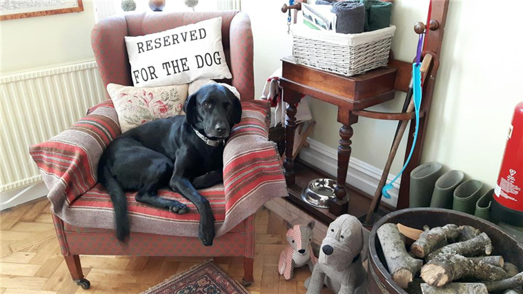 Resident Dog Barnie