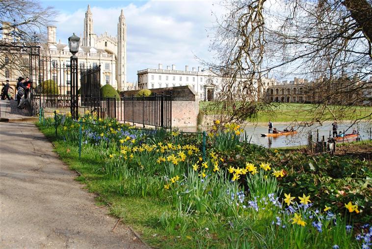 Avenue in Spring