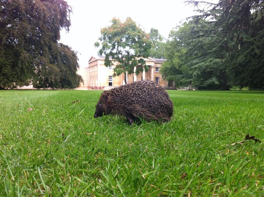 Wildlife in the College Gardens