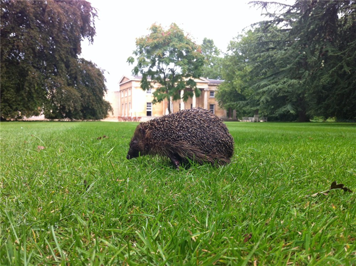 Wildlife in the College Gardens