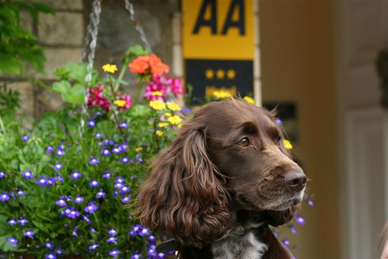 Resident Dog Mocca