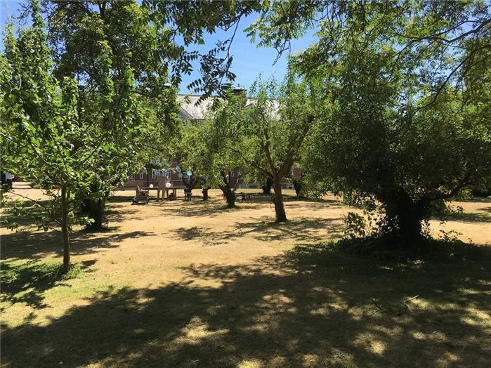 College Orchard